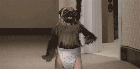 puppy monkey baby gif childish