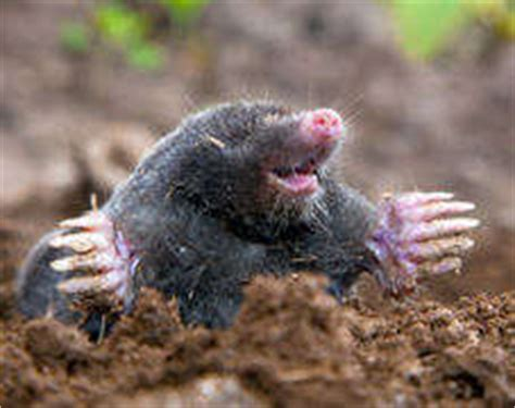 types  moles pest control products