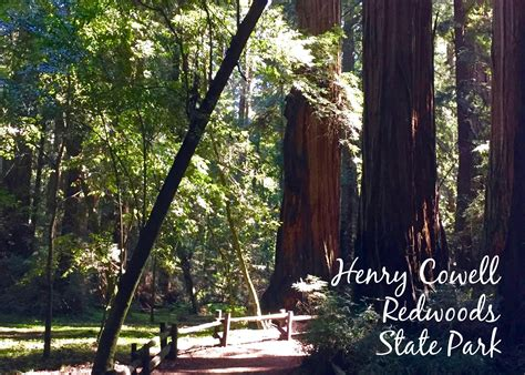 Garden Of Henry Cowell State Park Henry Cowell Redwoods State Park Simple Sojourns