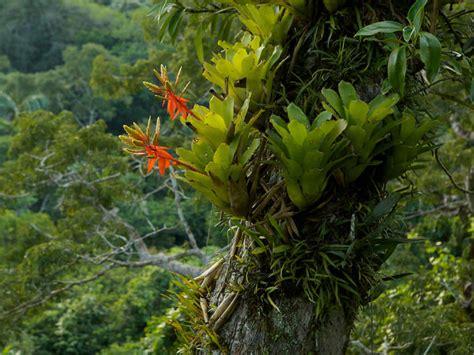 epiphyte world  flowering plants