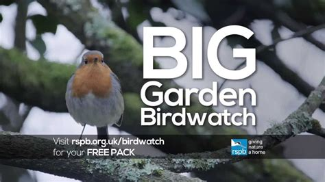 big garden birdwatch  national awareness days  calendar   uk