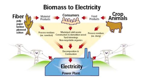 biography sources definition biomass energy energy sources biomass gasification
