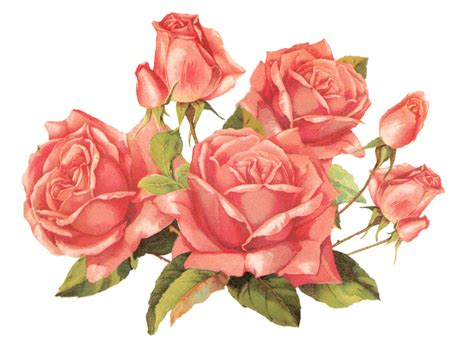 rose pattern png rose pink by jinifur on deviantart