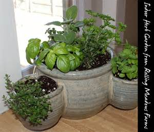 indoor herbal garden indoor gardening and diy sprouts soap deli news