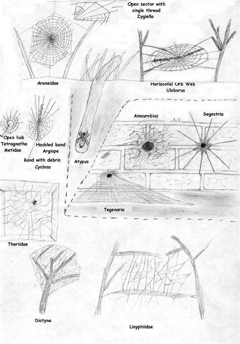 Australian spider identification location chart