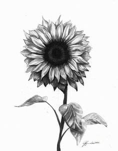 black and white sunflower tattoo designs sunflower