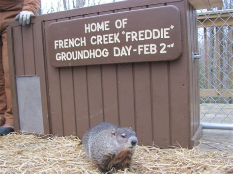 groundhog day sequel wv metronews freddie says six more weeks of winter on