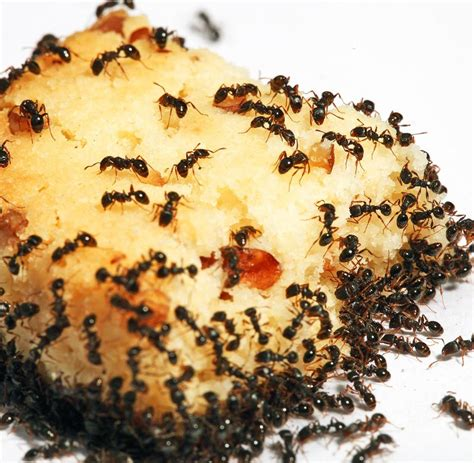 Was Hilft Gegen Ameisen Auf Der Terrasse 3700 by Terrassenschutz Blumentopftrick Hilft Im Kf Gegen
