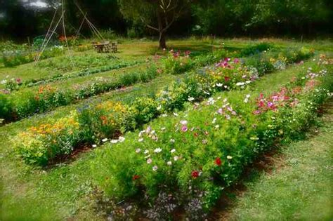 How To Make A Flower Garden Designing The Layout Of Your Cut Flower Patch Higgledy Garden