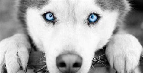 imagenes blanco y negro de animales 191 es verdad que los perros ven en blanco y negro