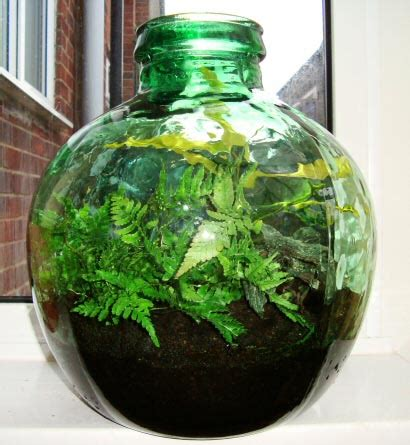 garden in a bottle how to create and grow a terrarium bottle garden our house plants