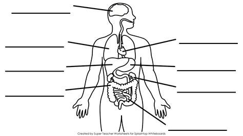 human diagrams to label human diagrams to label anatomy human