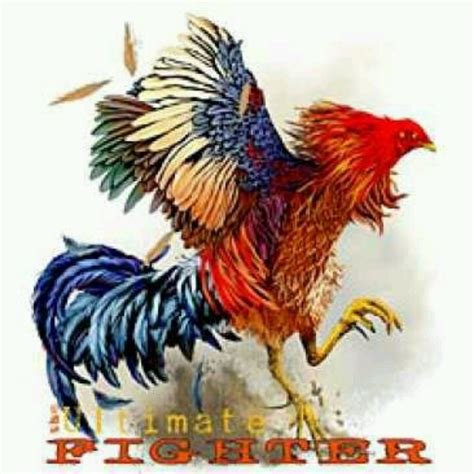 fighting rooster tattoo fighting rooster roads roosters