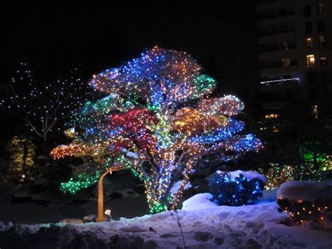 Botanic Gardens Denver Lights Blossoms Of Lights Picture Of Denver Botanic Gardens Denver Tripadvisor