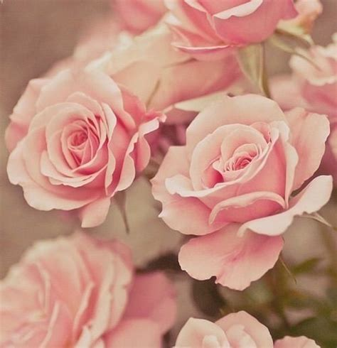 wallpaper girly flowers wallpaper girly pictures i love pinterest beautiful