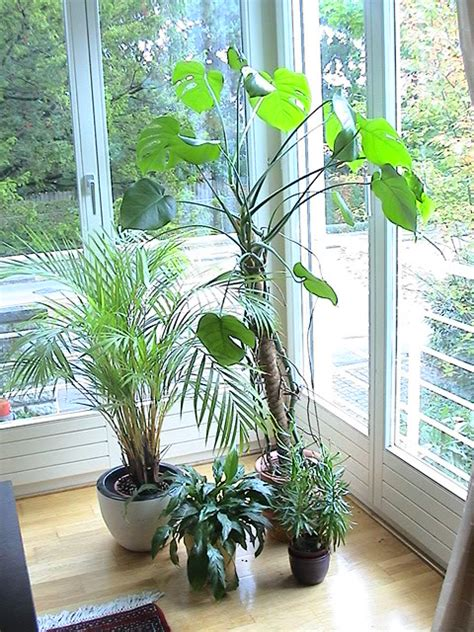 home interior plants plants