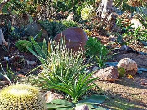 giardino di giardino di piante grasse piante grasse