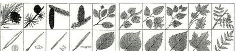 Pflanzzeit Für Bäume 3800 by Suche