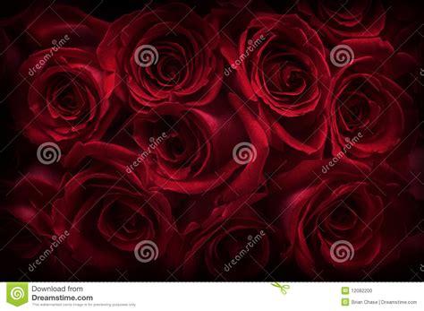 imagenes de rosas oscuras rosas oscuras foto de archivo imagen de regalo ramo
