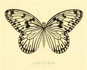 butterfly prints free butterfly print antique prints nature print
