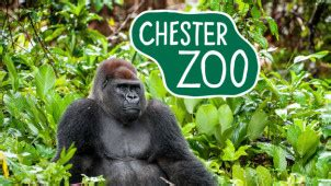 discount vouchers chester zoo chester zoo vouchers offers get 10 off online bookings