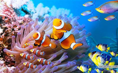 Sea Creatures For Your Computer by The Most Beautiful And Colorful Aquatic Sea Creatures