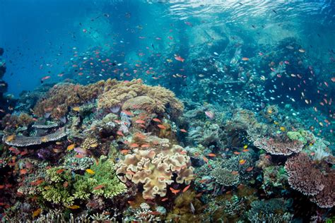 underwater dive home underwater tribe bali scuba diving liveaboards