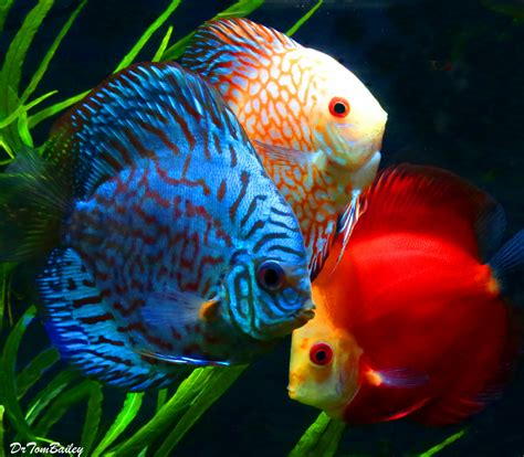 fish for sale discus fish for sale