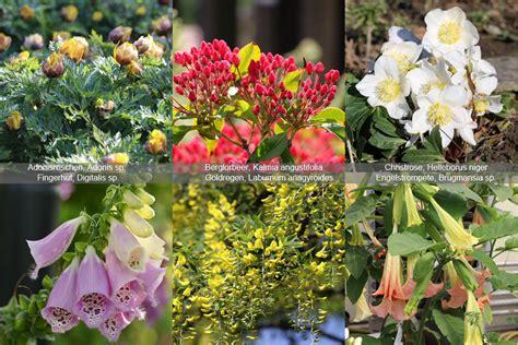 Garten Giftige Pflanzen by Giftige Pflanzen F 252 R Hunde Gef 228 Hrliche Giftpflanzen Im