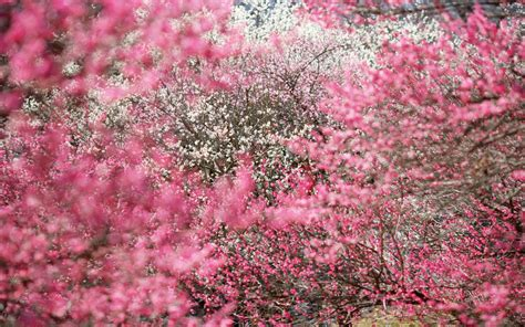 imagenes de rosas lindas para descargar imagenes de flores bonitas gratis