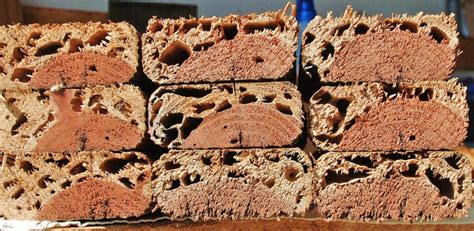 how to get rid of a swarm of bees q a how do i get rid of termites in a raised bed the