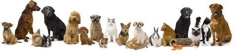 Make Money Selling Pet Products Online - pets at home discount sales codes cashback topcashback