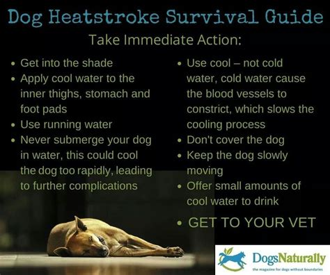 heat stroke in dogs heat stroke in dogs pets