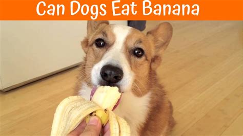 Can Dogs Eat Cinnamon Your Guide About Serving Foods Containing Cinnamon To Dogs