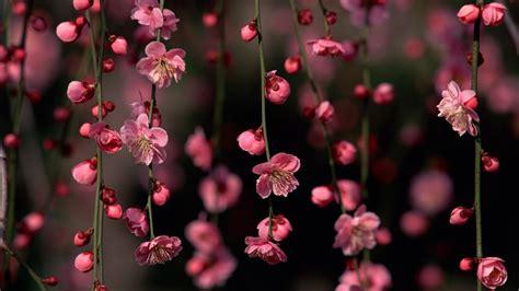 blooms hd wallpapers vintage pink flowers hd desktop wallpaper background