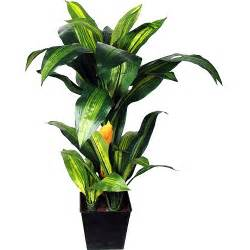 potted tropical plants better homes and gardens tropical plant walmart