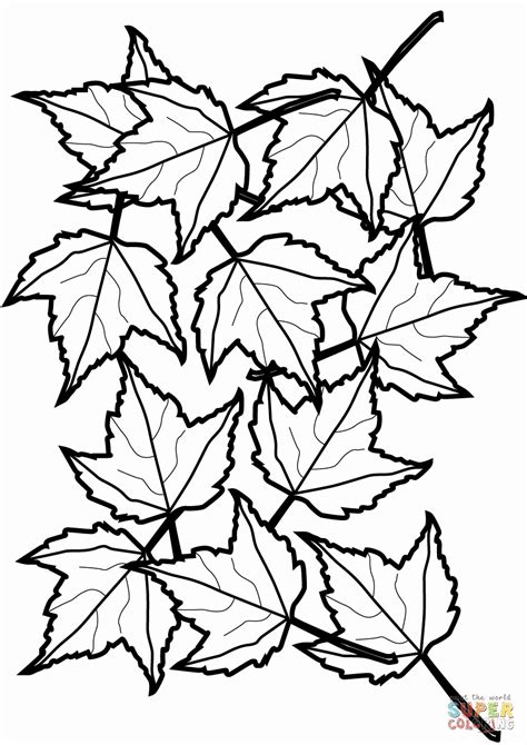 fall leaf coloring pages fall leaf coloring pages cpaaffiliate info