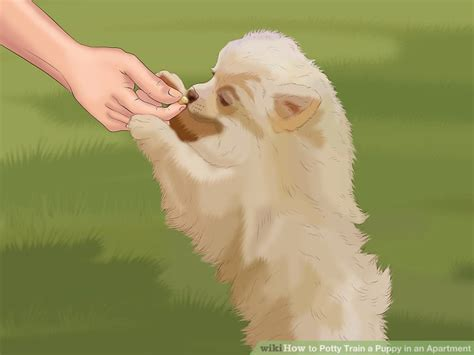 how to potty a puppy in an apartment how to potty a puppy in an apartment