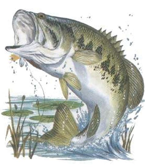 bass fish jumping bass jumping fishing pinterest