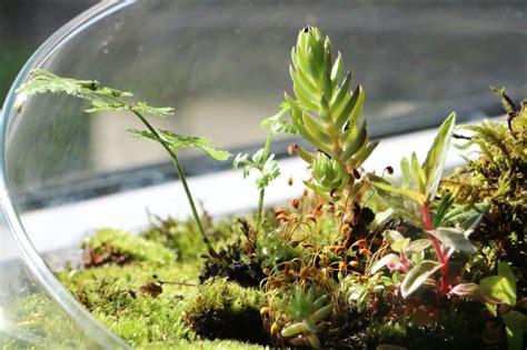 Ewiges Terrarium Bauen by Bring Gr 252 N In Dein Zuhause Wurzel Moos Terrarium Marke