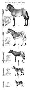 evolusi kuda berita biologi
