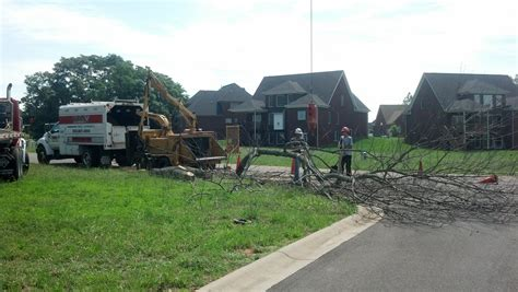 service louisville ky tree services louisville ky climb ax tree services