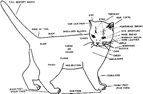 cat sections condition and structure