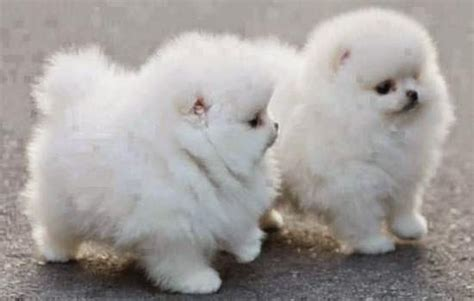 fluffy breeds fluffy breeds www pixshark images galleries with a bite