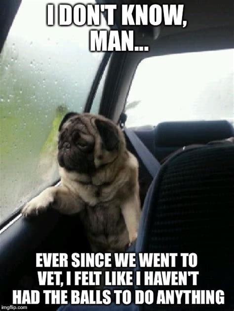 I Don T Know Man Meme - introspective pug imgflip