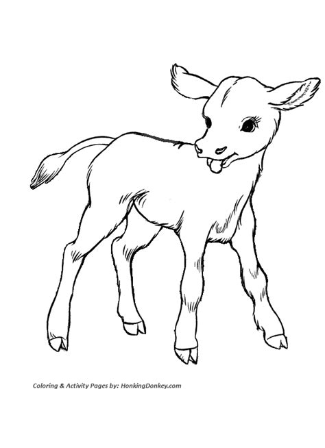 cow coloring pages printable cute baby calf coloring