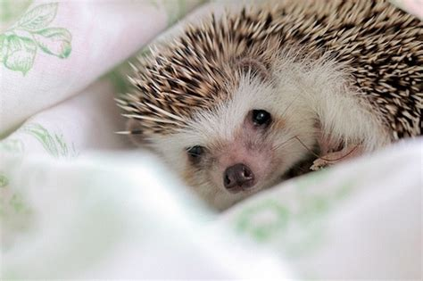 hedgehog bed hedgehog quot please can you read me a story as i m now