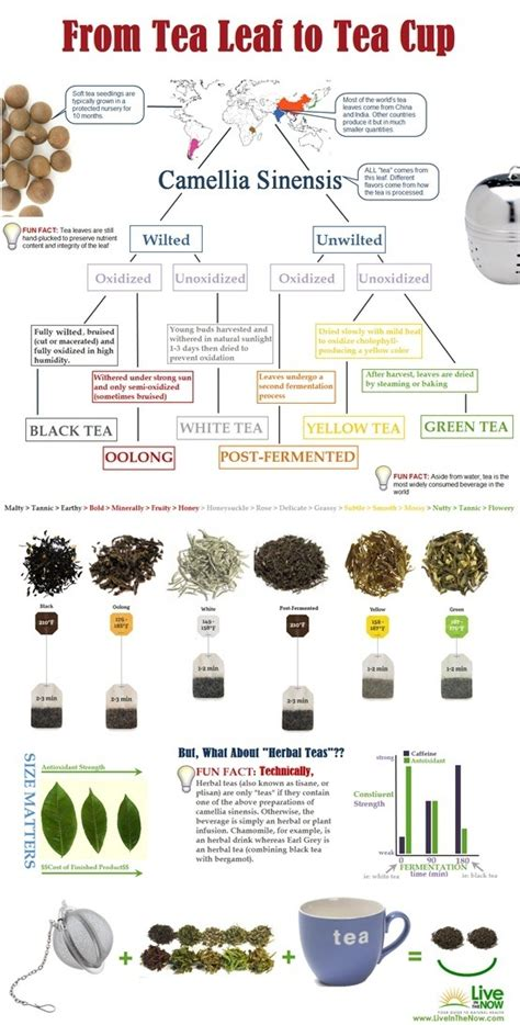 Process Of A Cup Of Tea Testbig by What Is The Process Tea Goes Through From The Plant To Be Ready To Be Used