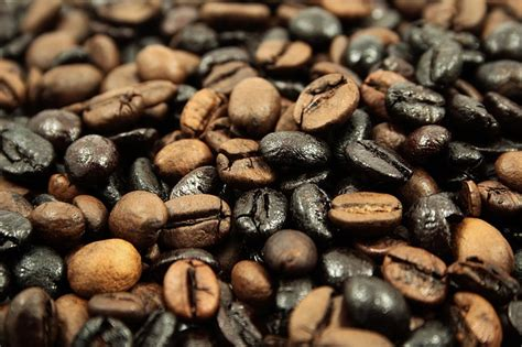 Black Coffee Robusta Roasted understanding the difference arabica vs robusta the coffee barrister