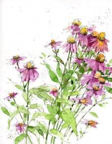 echinacia drawings sketch watercolor shari blaukopf art